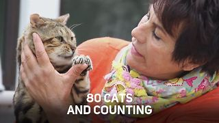 How many cats do you need to be a crazy cat lady? - Video