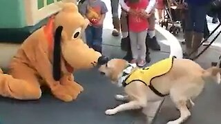 Service Dog Is Incredibly Happy To Meet Pluto At Disneyland