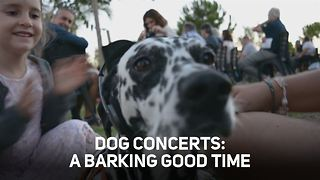 Three reasons to have your dog tag along for a concert - Video