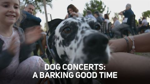 Three reasons to have your dog tag along for a concert