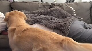 Jealous dog doesn't let owners cuddle without him