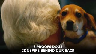 Dogs are gonna take over the world and here's the proof - Video