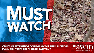 Only 3 Of My Friends Could Find The Birds Hiding In Plain Sight In These Photos. Can You? - Video