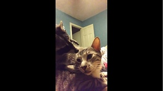 Cat and raccoon share incredibly cute moment