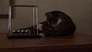 Cute Cat's Never Ending Toy - Video