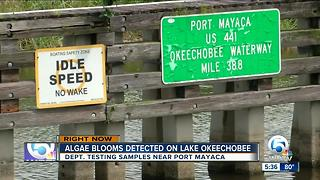 Algae blooms detected on Lake Okeechobee - Video