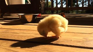 Sweet Chick Falls Asleep Standing - Video