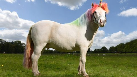 Meet the woman who spends hours each day grooming unicorns – and even paints their hooves with glittery nail polish