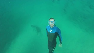 Bondi lifeguards swim with eight sharks