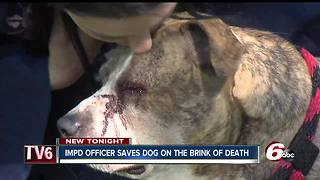 IMPD officer rescues dog that was shot &  left for dead; adopts him - Video