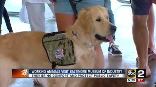Working animals visit BMI - Video