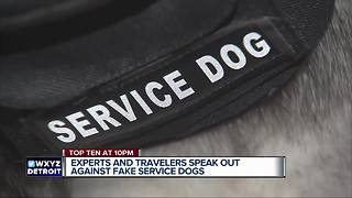 Experts and travelers speak out against fake service dogs - Video