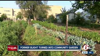 Community garden created in Shelby County where blighted homes were removed - Video