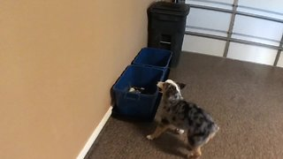 Conscientious Dog Learns How To Recycle