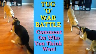 Dog best friends have epic tug-of-war battle
