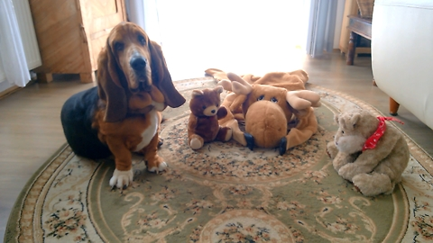 Basset Hound spends quality time with his best friends