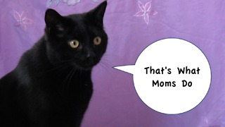 That's What Cat Mom's Do - Furball Fables
