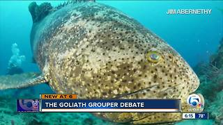 Debate over allowing fishing for Goliath grouper - Video