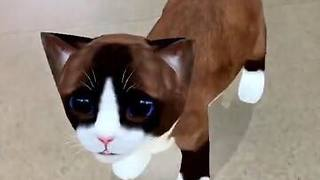 This AR cat is the cutest new thing.  - Video