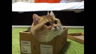 Adorable Kitten Plays With New Box - Video