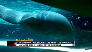 Snooty Dies - Video