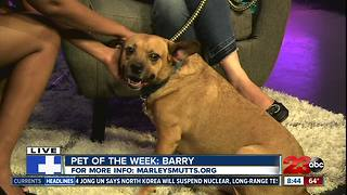 23ABC Pet of the Week: Berry - Video