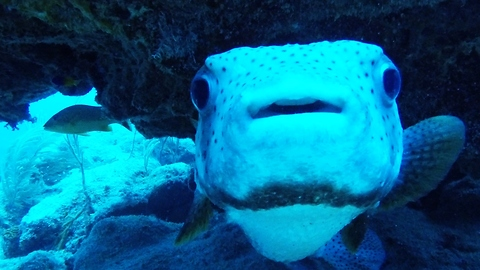 Adorable baby-faced fish is extremely dangerous