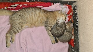 kittens sleep with their mother