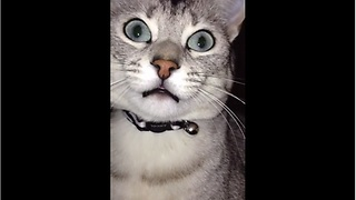 Vocal cat loves to chat with human - Video