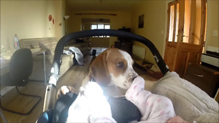 Curious dog closely investigates newborn baby - Video