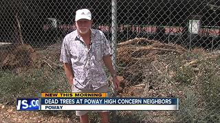 Dead trees at Poway High School concern neighbors - Video