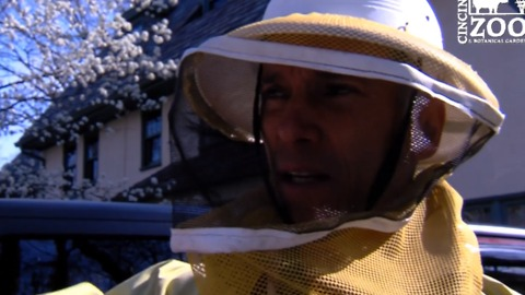 Cincinnati Zoo Workers Rescue and Rehouse 50,000 Bees Found in Garage