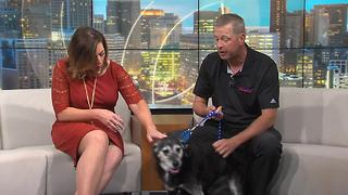 Pet of the Week: Zora - Video