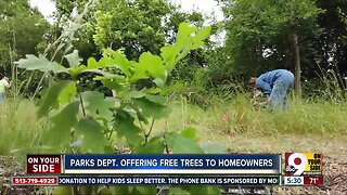 Cincinnati Parks offers free trees for planting within city limits