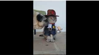 Pug unimpressed with cat's cowboy outfit