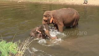 It Seems That Even Baby Elephants Like To Splash In Rivers - Video