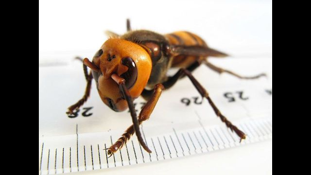 Learn About The 10 Most Dangerous Insects In The World