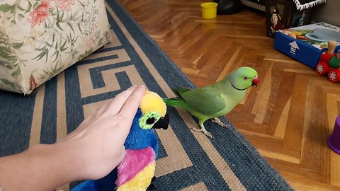 Parrot gets jealous of parrot stuffed animal