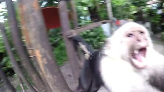 Monkey jumps at tourist's camera - Video