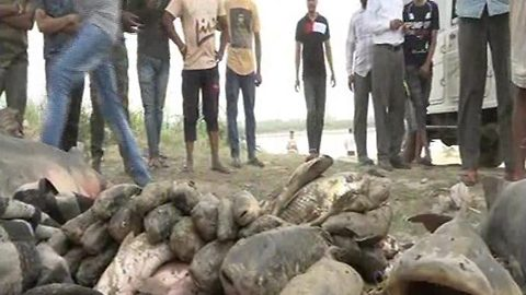 Hundreds of dead fish pile up on river due to molasses leak