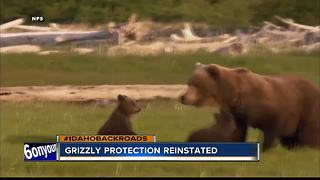 Environmentalist want grizzlies in Central Idaho