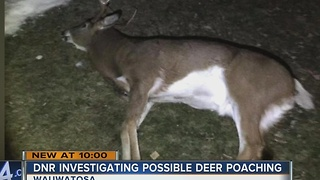 Possible deer poaching investigated in Wauwatosa - Video