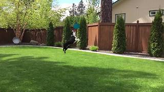 Dog Runs And Jumps To Catch A Frisbee In Slow Motion