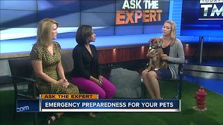 Ask the Expert:  Getting your pets ready for an emergency - Video