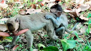 Oh What young baby Monkey Want To Do - Video