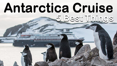 5 Best And Surprising Things About An Antarctica Cruise