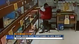 West Allis Police searching for tortoise thief