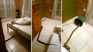 Good night hiss: Fearless Aussie who found 13ft snake in her bed claims it was sizing her up for a meal