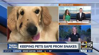 Keeping pets safe from snakes - Video