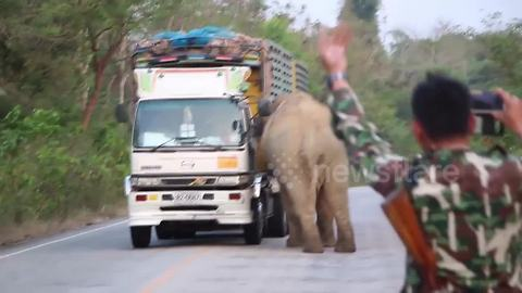 Elephant causes traffic chaos after stopping trucks to steal food